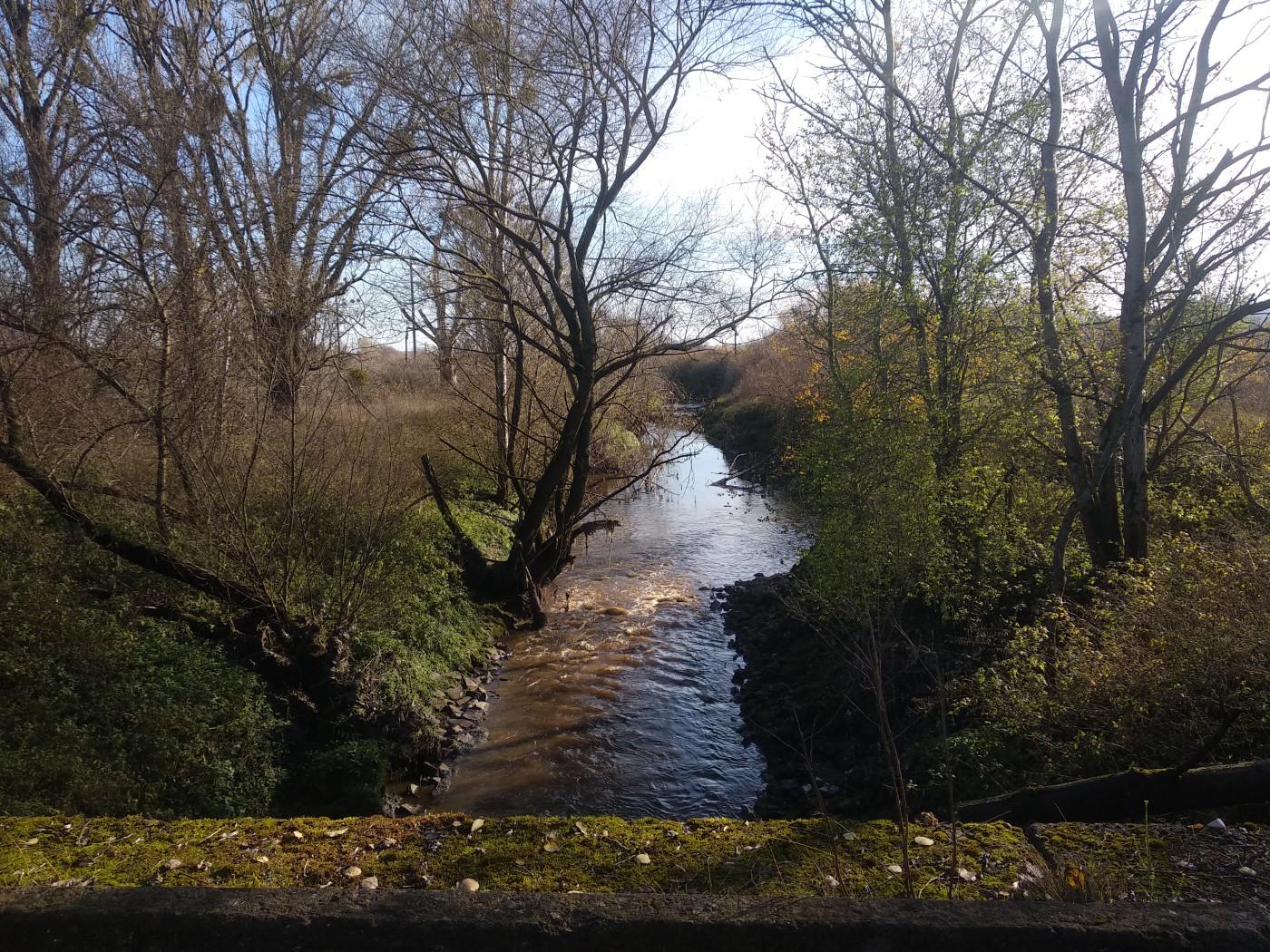 Виток річки Полтви в лісопарку Погулянка